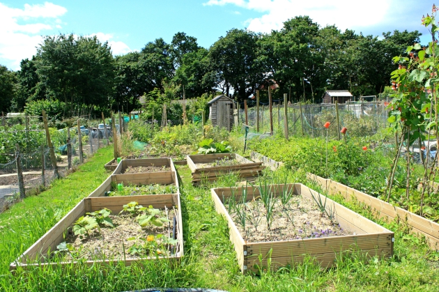 Hedge End Allotments
