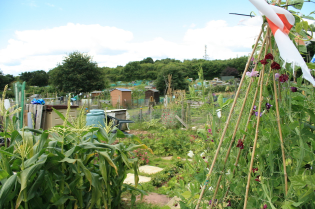 Hedge End Allotment
